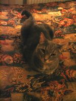Camoflagued Cat is.. Visible by 13blackdragons