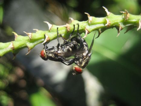 flies, doing what they do best by saggers