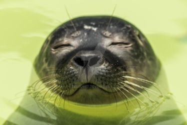 seal by Perseus67