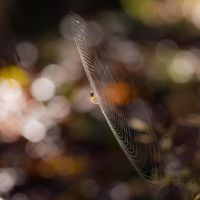 The web by Akxiv