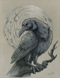 Raven and Moon Drawlloween/Inktober day 11/12 by EricKemphfer