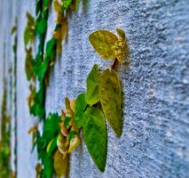 just vine wall by levoniust