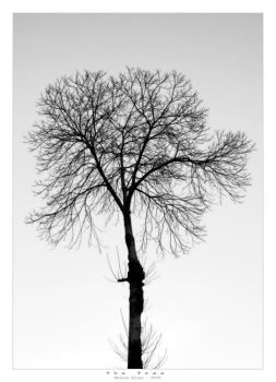 The Tree by ZwD