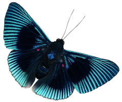 Blue Butterfly 673  png by xybutterfly