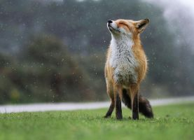 Enjoying the Rain... by JulianRad