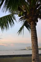 The Coconut Tree by ChuaCarbonara
