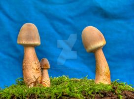 More HDR Mushrooms 7 by Dracoart-Stock
