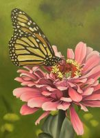 Butterfly lunch by georgeayers2000