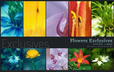 Exlusive Stock - Flowers by kuschelirmel-stock