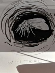 Whitefly by TheHeadlessPheasant