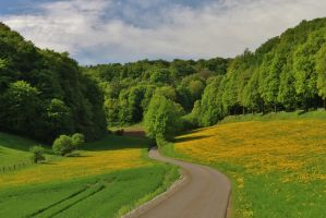 way in spring by Dieffi
