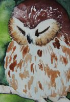 Sleepy Owl ACEO by teacupmusings