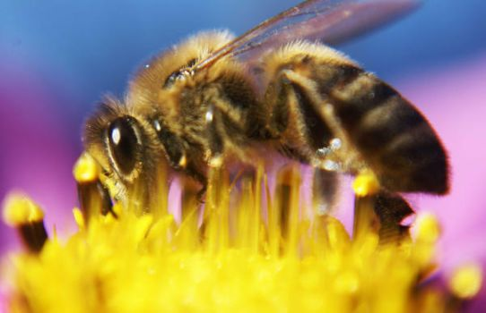 bee2 by bupolat
