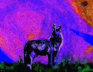 Coyote Howl  Strong Oil Push (1) Will Like by Yosemite-Stories