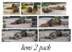 lion 2 pack by syccas-stock