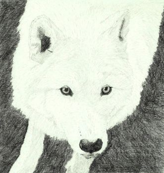 White wolf by Sollerion