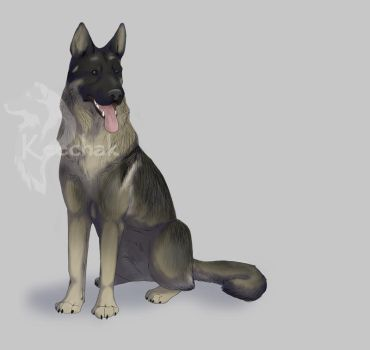 Black Sable German Shepherd by KeechakVarg
