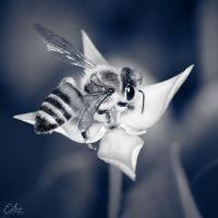 Dark Bee by Eibography