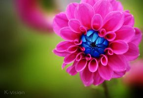 Colorful by Khaled-vision