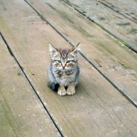 a kitty on the pier by greentortoise