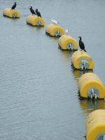 .Birds on bouys. 0093 by DelinquentDog