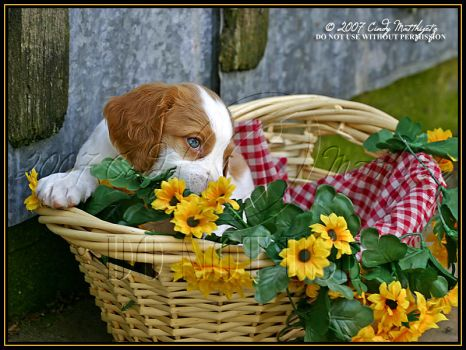 Countrified Puppy by octagonalstar
