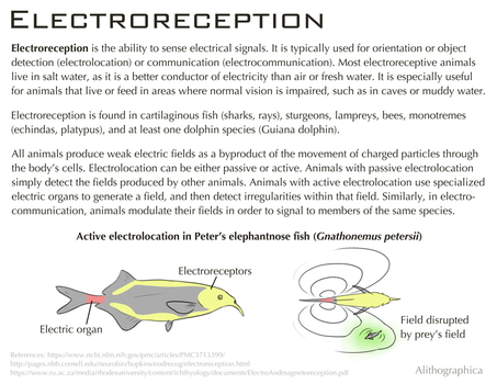 Science Fact Friday: Electroreception by Alithographica