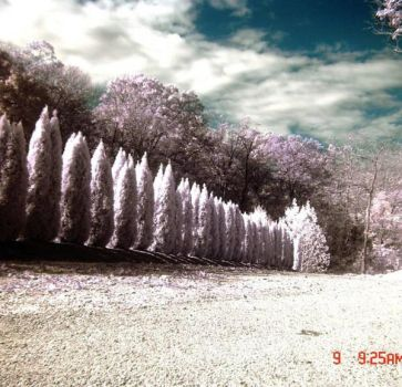 infrared photography 2 by Shim7