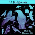 Crows, Ravens and Birds Brush Pack by dollieflesh-stock