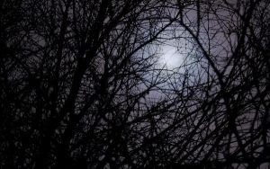 Misty Moon through Trees by woodythrower
