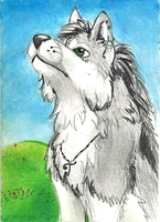 Cally-Arctilly ACEO by TweedPawn