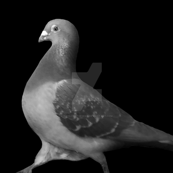 Pigeon #1 by RaynaOfTheDead