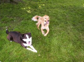 Jack and Molly Playing 4 by Latias-Eevee