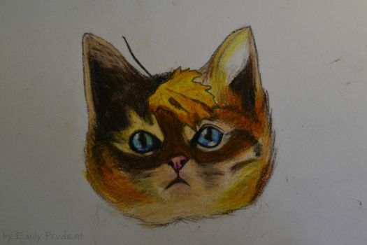 cat by EmilyPrudent
