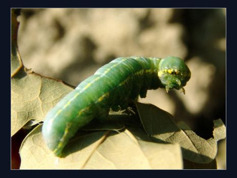Greenterpillar by thewebcatcher