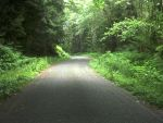 Wandering Forks Washington by RC-ForksWA