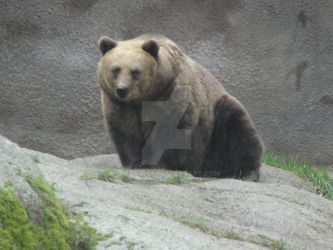 Look of a Bear by Degiance