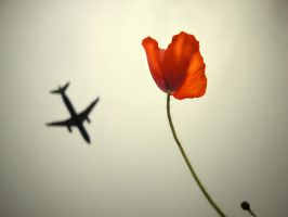 Plane Red Poppy...Period by markroutt
