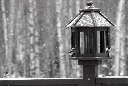 Chickadees in Snow, Too by scaredofspiders