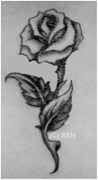 Rose Tattoo Design by Hitomii