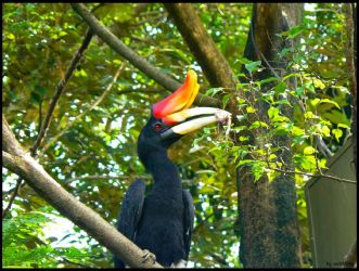 The Hornbill Series 2 by mcrufus