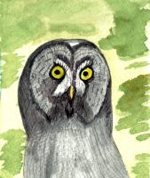 Great Grey Owl study by GentlestGiant
