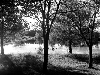 Lake and Trees 3 by coolhandchrisrocks