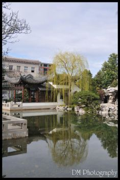 Portland Chinese Gardens XII by davidmoakes