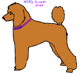 WCK's Ginger Snap by CalliesKennel