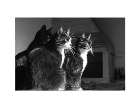Cats by Mheely
