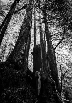 among the redwoods by cenevols