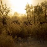 FrostySunrise by Letiso