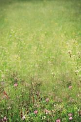 Background or texture- country by CathleenTarawhiti
