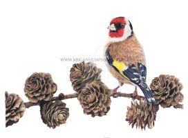 Goldfinch Pencil Drawing by stardust12345